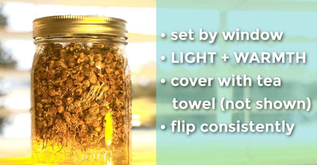 Mason jar filled with herbs and carrier oils to infuse. Solar method of infusion.