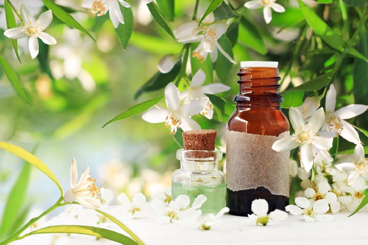 Best Essential Oils for Natural Skin Care Recipes Featured Image