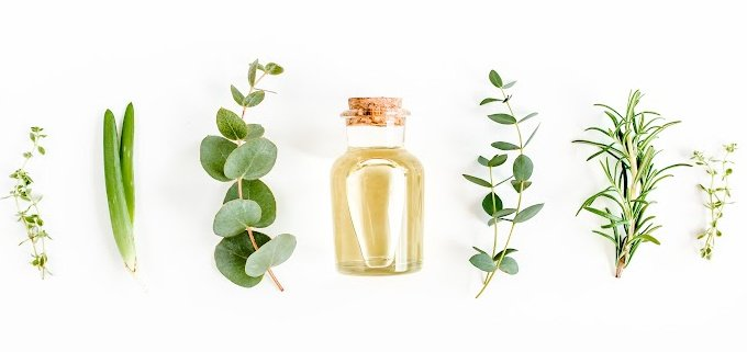 bottle of essential oil sitting in a row of herbs such as eucalyptus, rosemary, and thyme